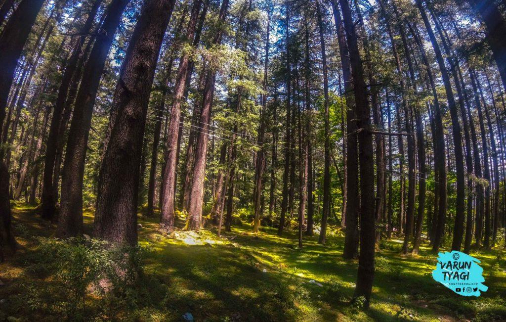 Nature Park In Manali On The Way To Vashisht Village