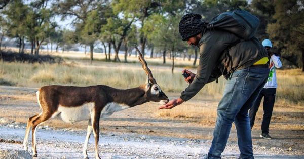 Tal Chappar wildlife sanctuary in Rajasthan