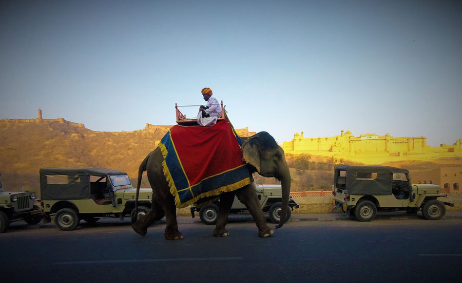 Elephant Rides at Amer Fort in Jaipur