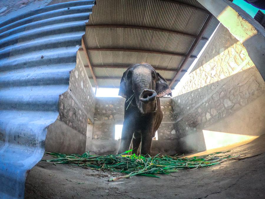 Elephant holding place in Hathi Gaon in Jaipur
