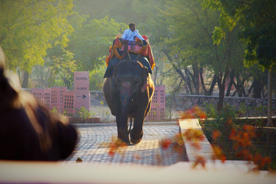 Elephant with their mahout in Hathi Gaon in Jaipur